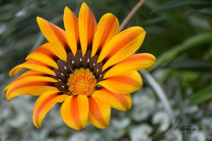 flowerdome